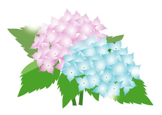 hydrangea clip art cliparts co hydrangea clip art images hydrangea clip art b&w