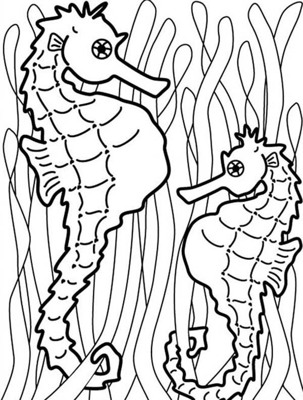 seaweed cartoon coloring pages - photo#20