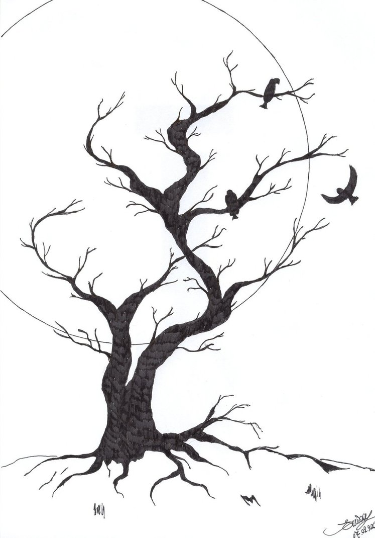 Tree Drawings - Cliparts.co