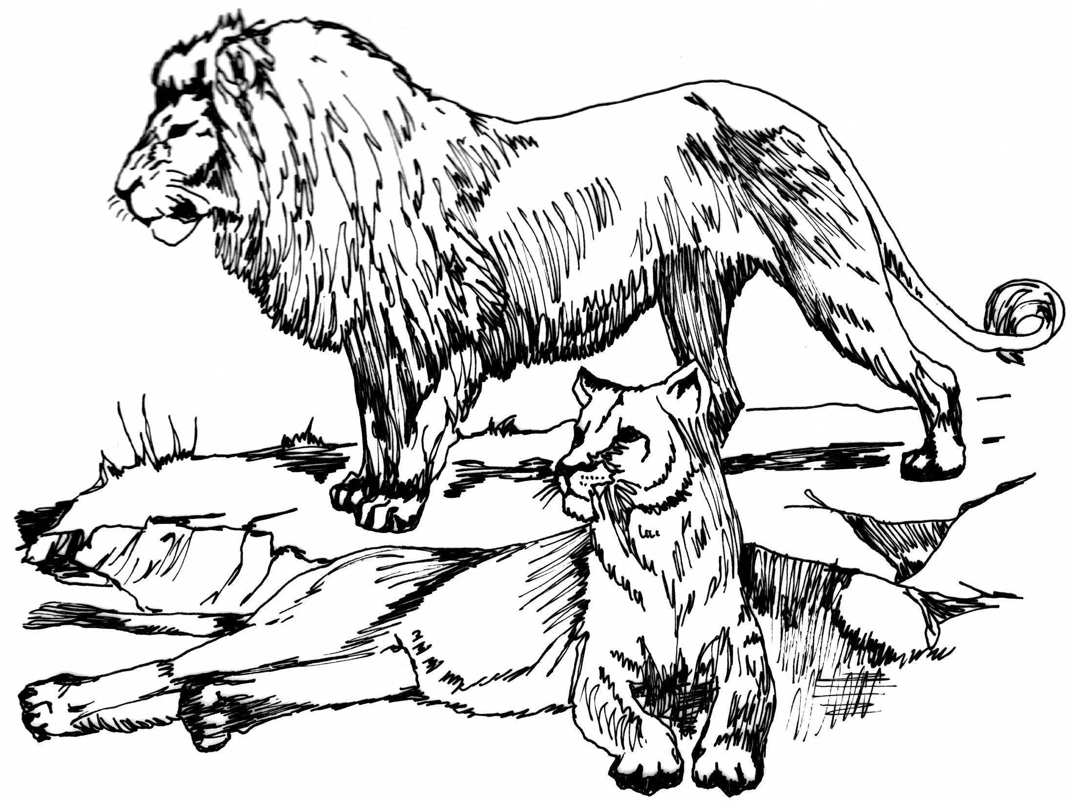 pi5opRR4T.jpg (2200×1643) | animals | Pinterest | Lions