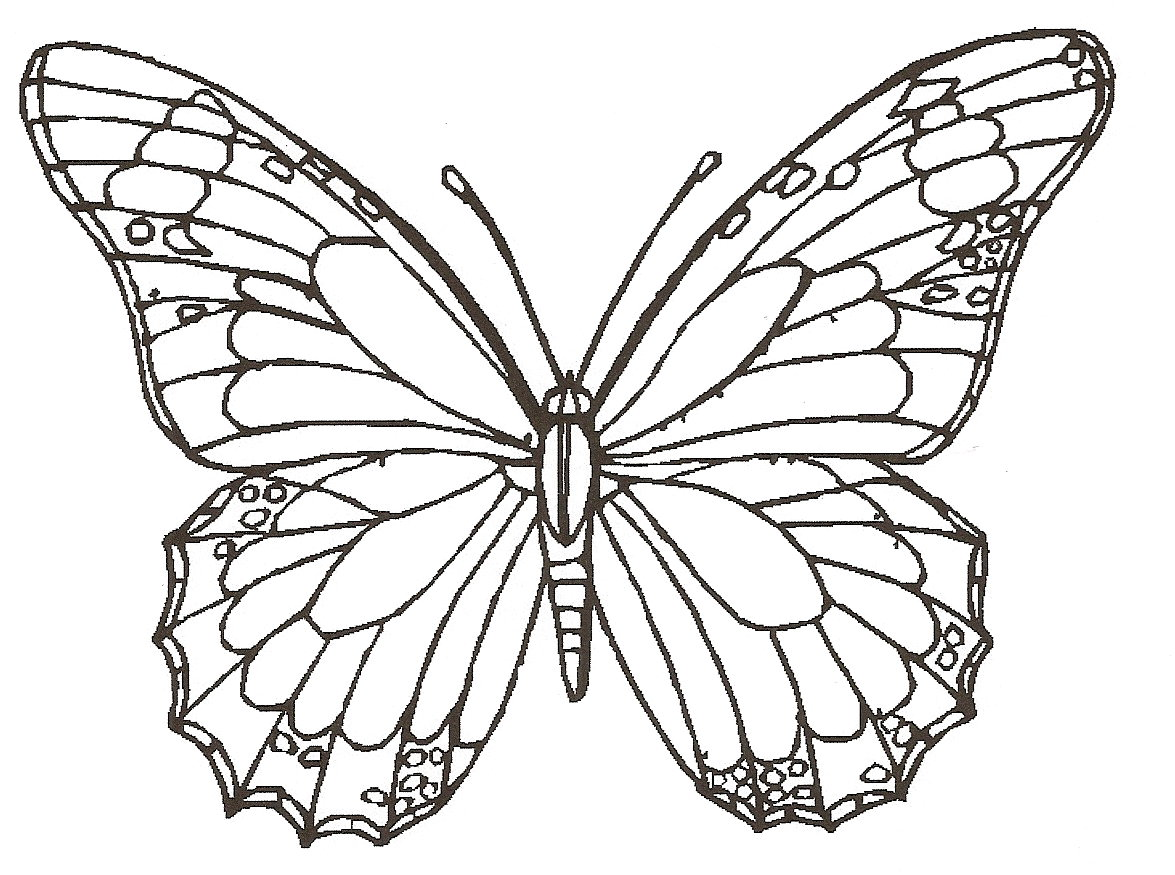 Line Art Butterfly : Cute butterfly line drawing cliparts