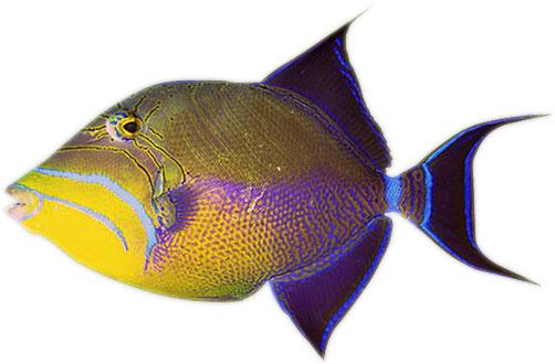 clip art fish moving - photo #33