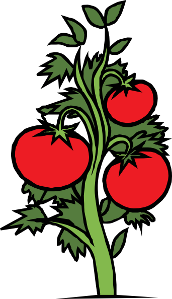 Tomato Plant clip art - vector clip art online, royalty free ...