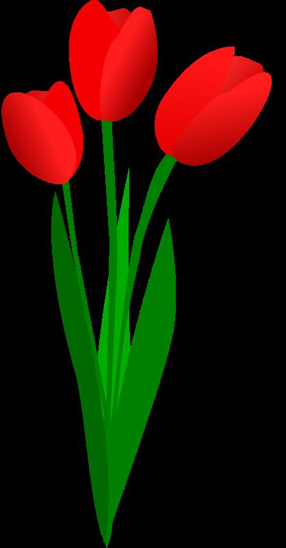 Tulip Clip Art Free - Cliparts.co