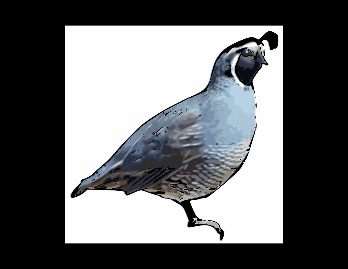 clipart of quail - photo #5