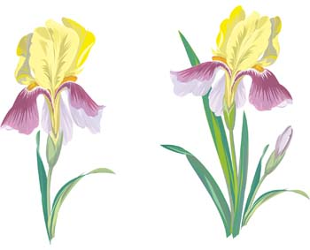 iris flower clip art. Black Bedroom Furniture Sets. Home Design Ideas