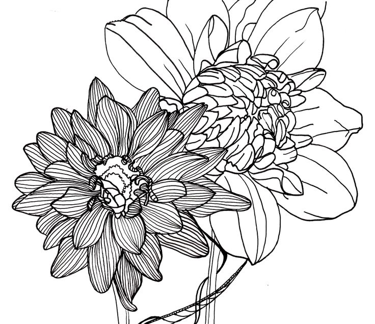 Line Art Flowers Husqvarna : Flower line drawing cliparts