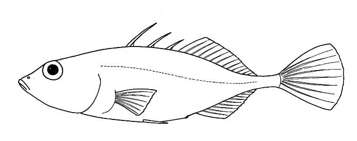 Drawing of fish for Drawings of fish