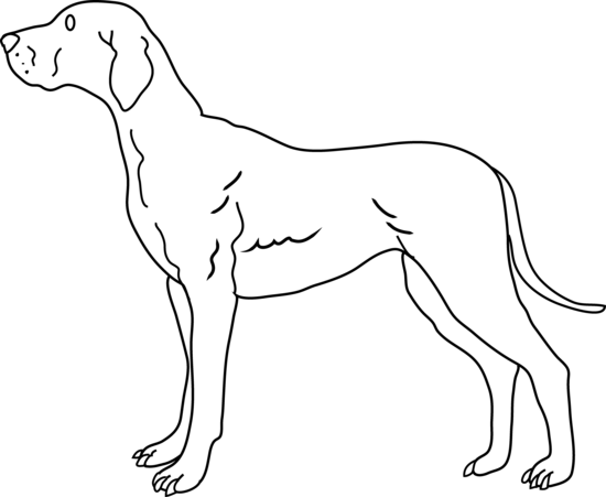 Line Drawing Of A Dog S Face : Dog line art cliparts