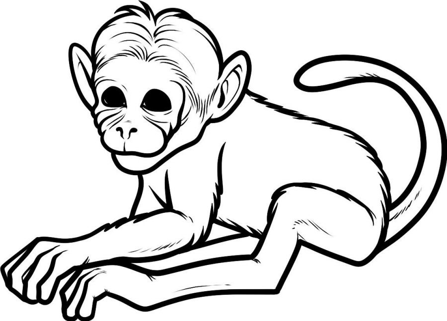 Cute Coloring Pages of Baby Monkeys Baby Monkey Coloring Pages