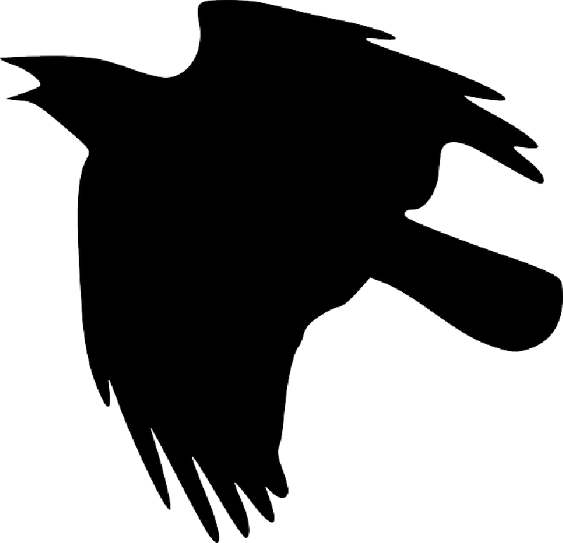 Crow And Eagle Wallpaper | WallpaperToon