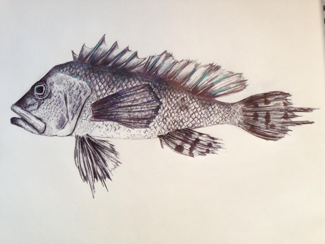 how to draw a detailed fish