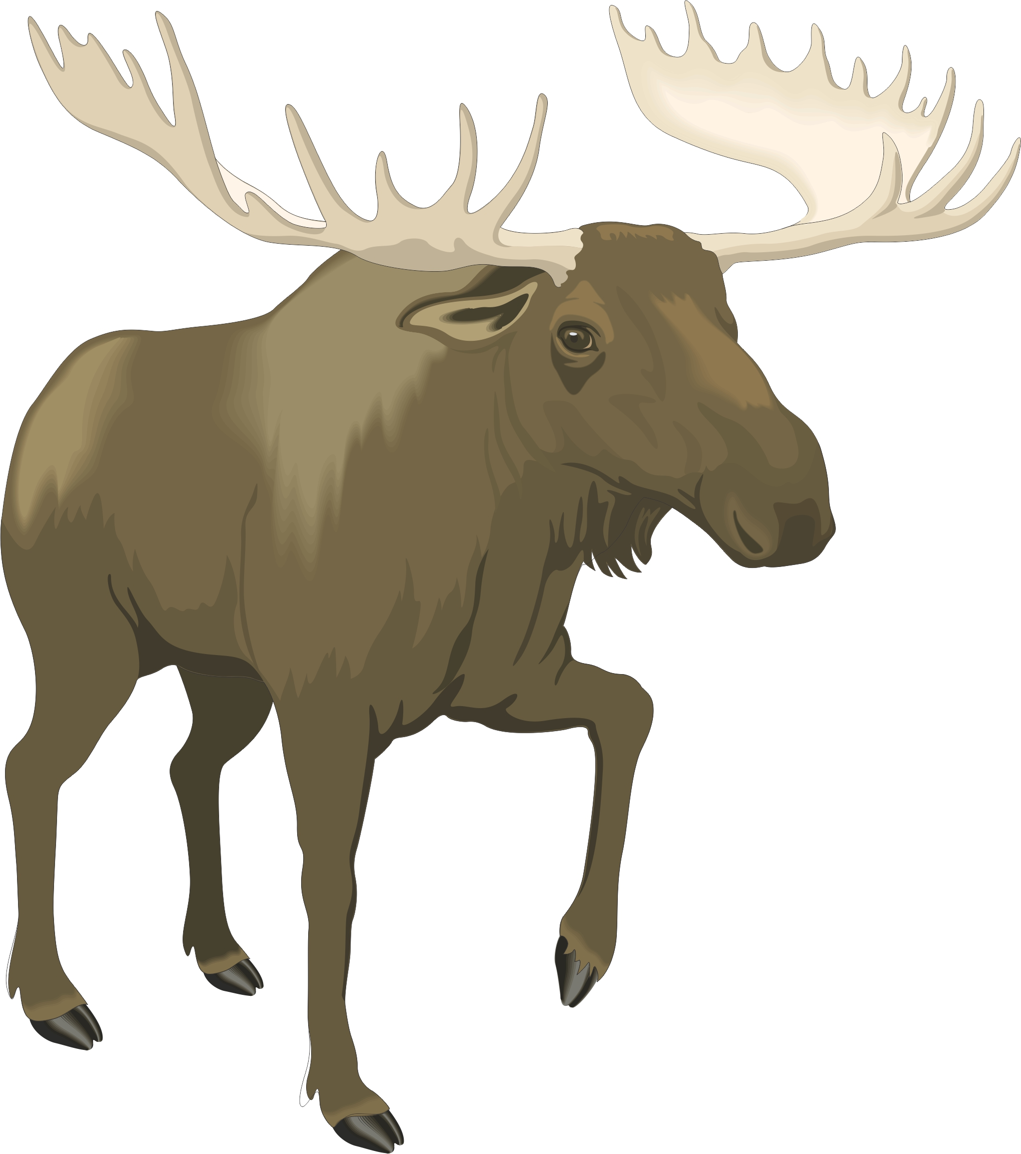 Cartoon Moose Images - Cliparts.co