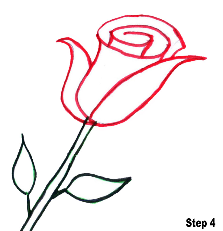 Rose Line Drawing Easy : Line drawing of a rose cliparts