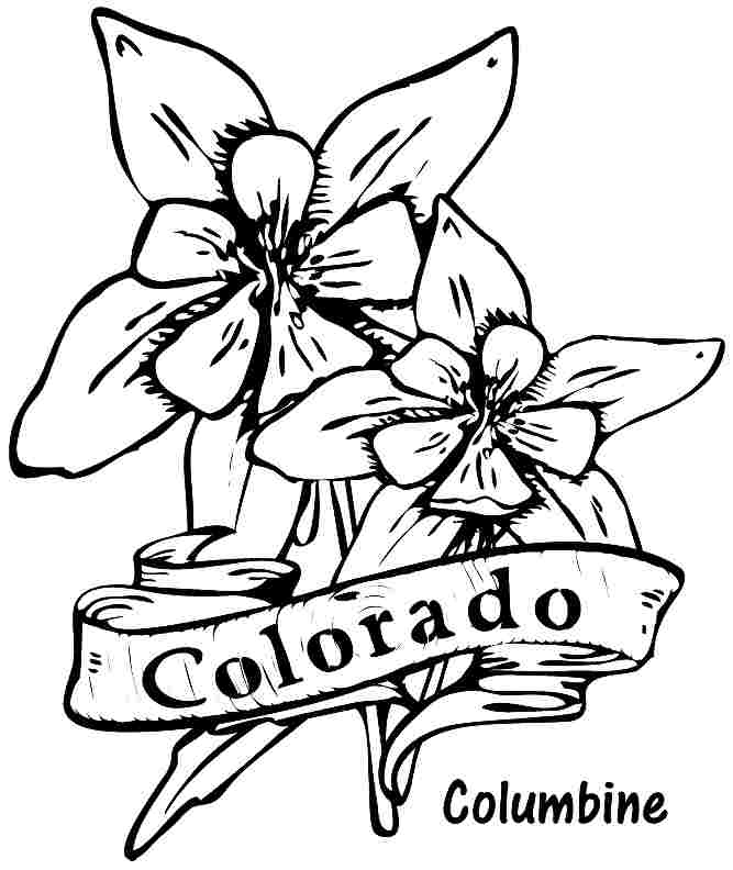 Columbine Flower Line Drawing : Hibiscus flower drawings cliparts