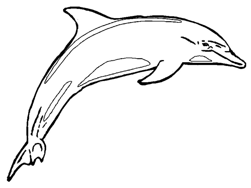 Line Art Free : Dolphin line art cliparts