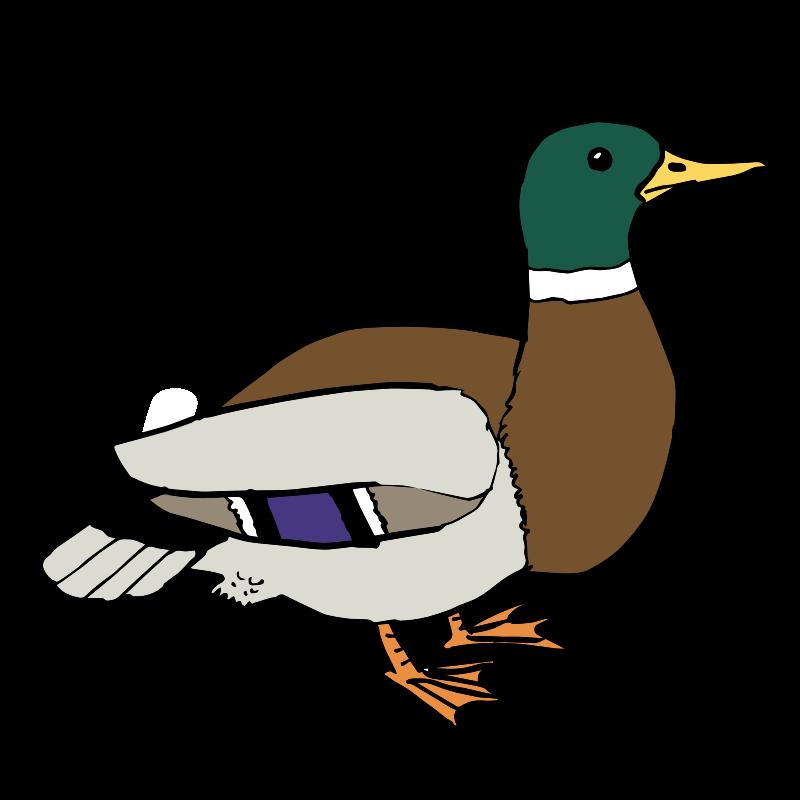 Clip Art Of A Duck - C...