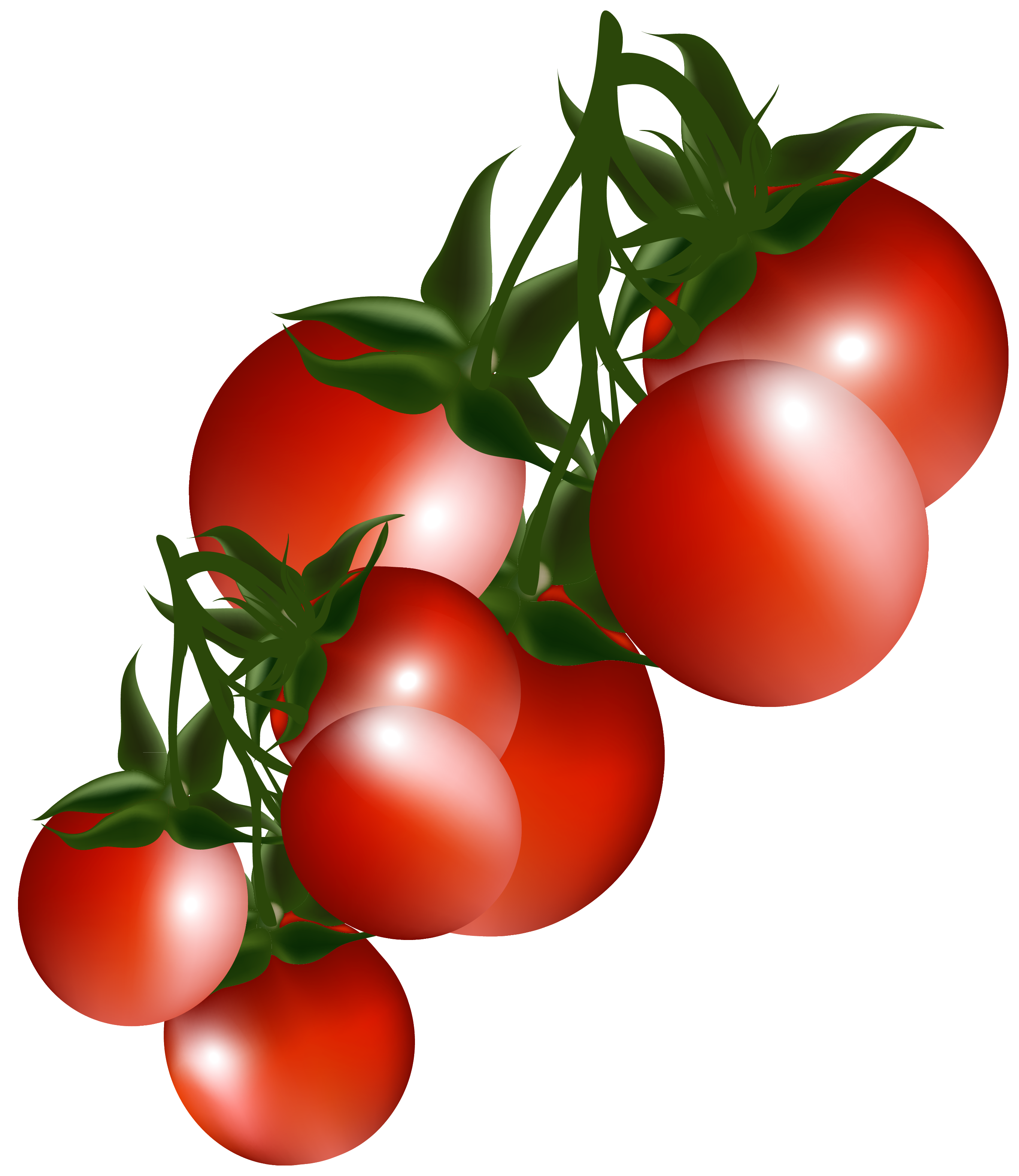 Tomatoes Branch PNG Clipart Picture