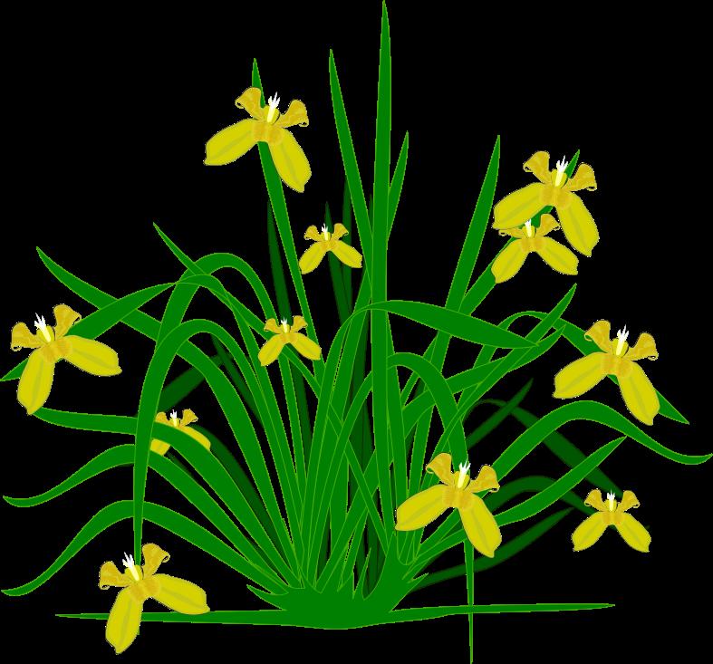 free flower clip art