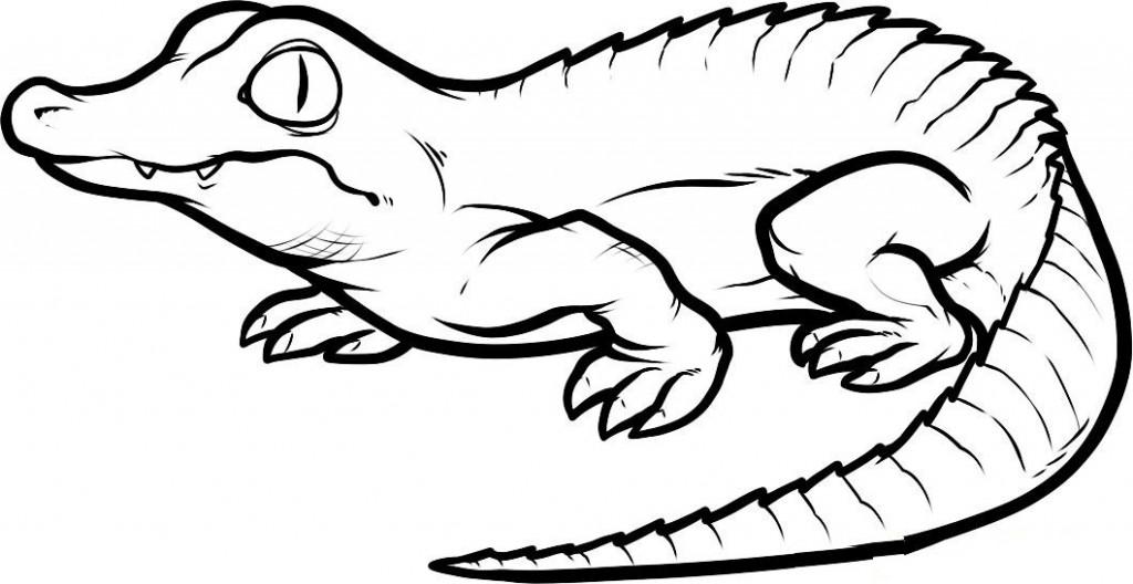Cartoon Alligator Images - Cliparts.co