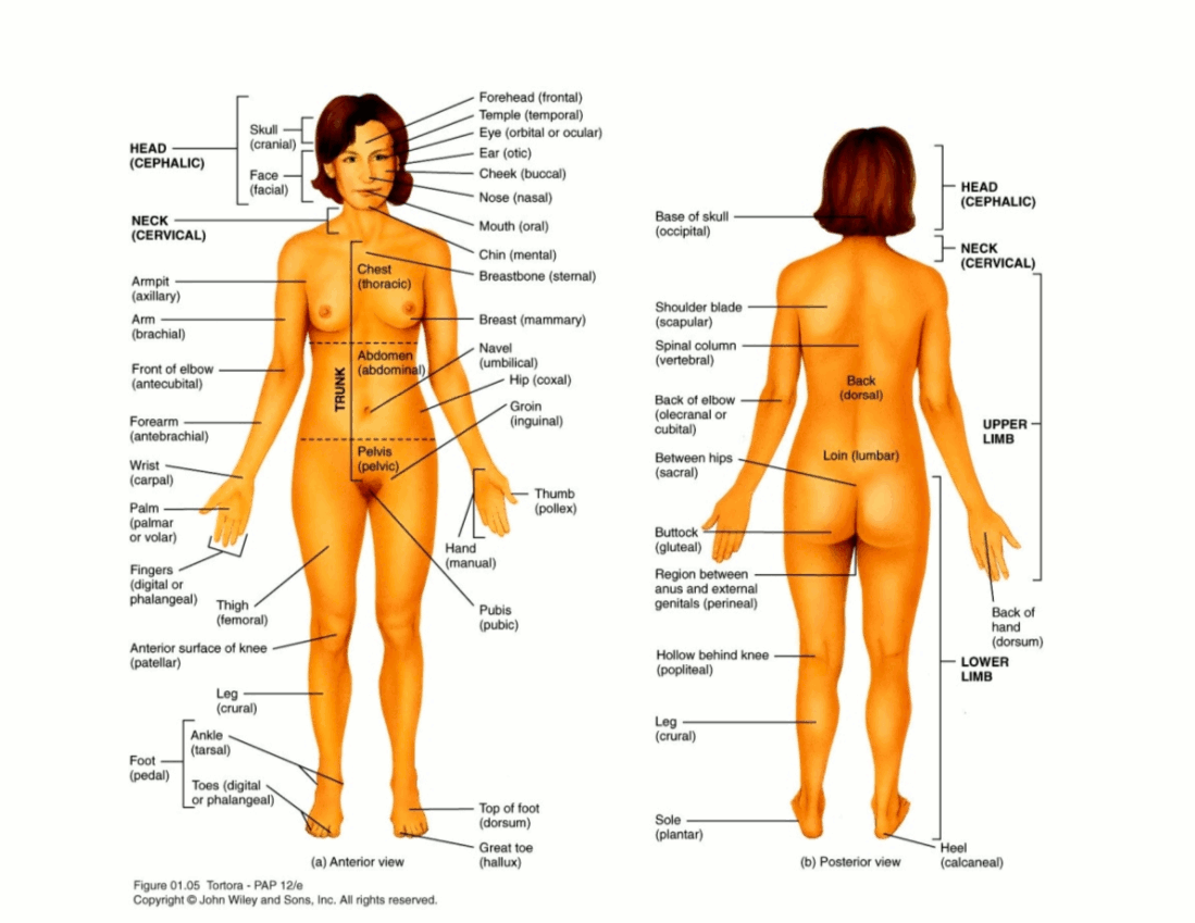 Female anatomy names