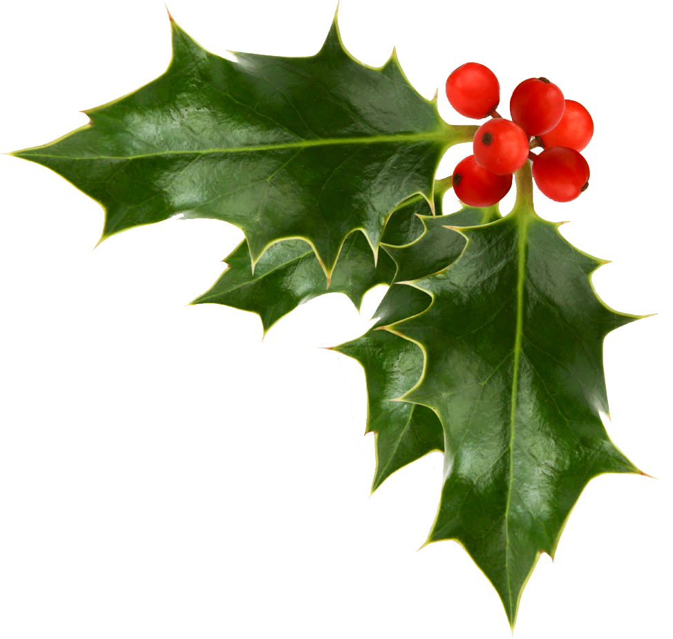images of christmas holly