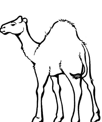 camel pictures to print