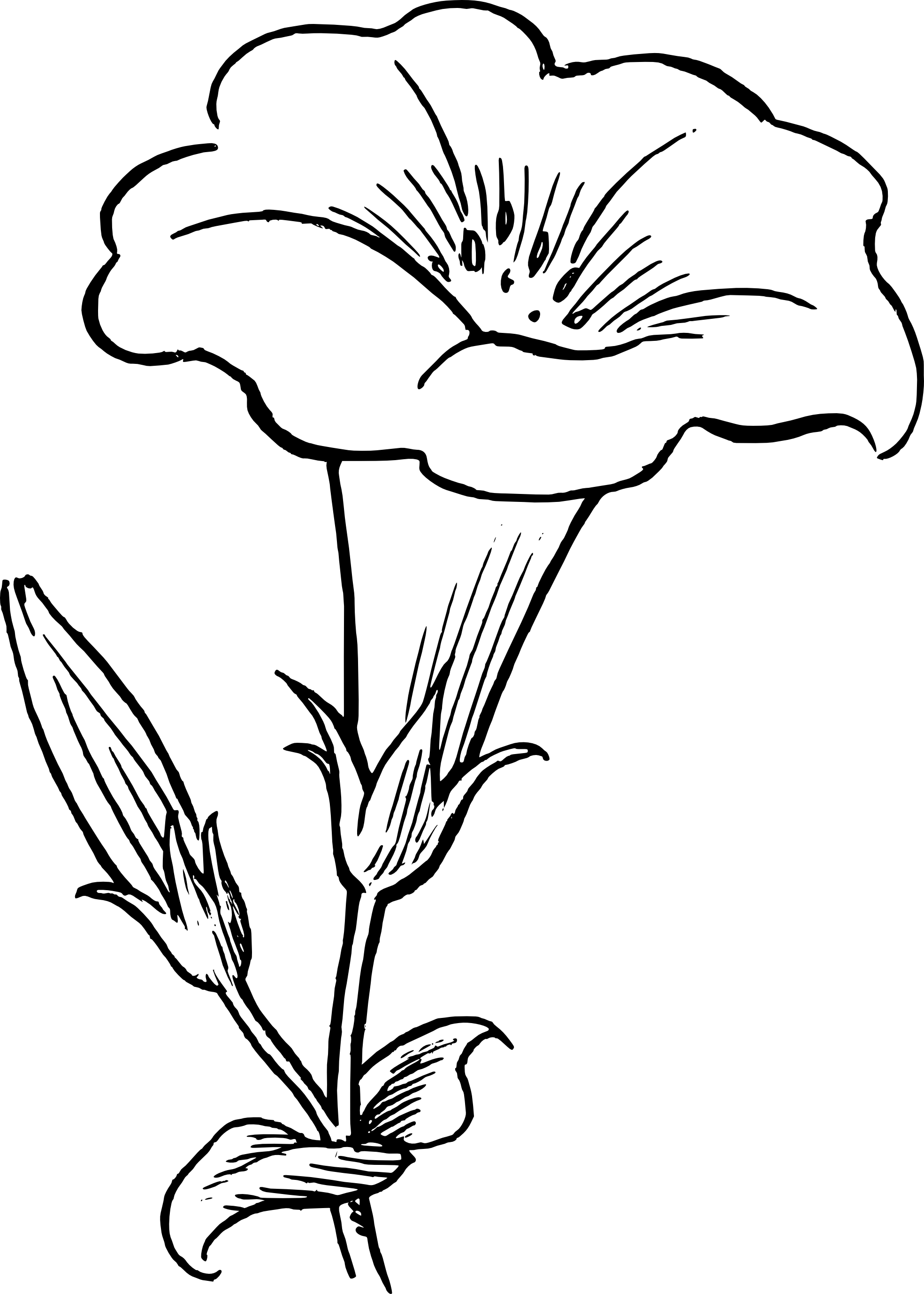Flower Plant Line Drawing : Pictures of flower drawings cliparts