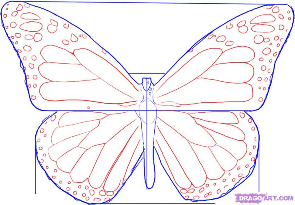 Monarch butterfly template for How to make a butterfly drawing