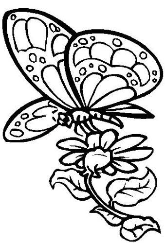 Butterfly With Flower Design