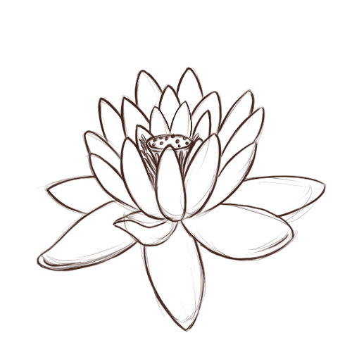 Line Drawing Lotus : Lotus flower line drawing cliparts