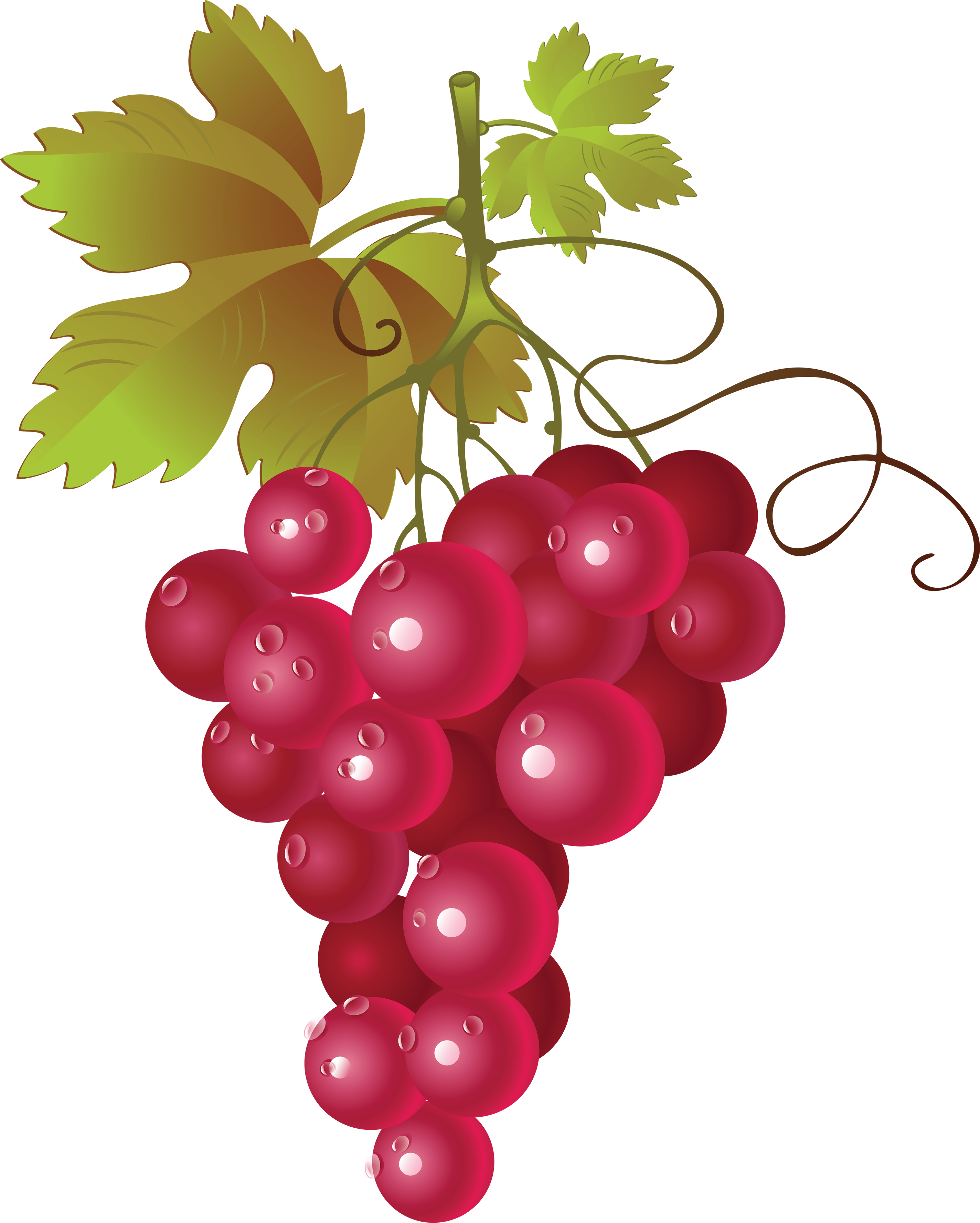 Pictures Of Red Grapes - Cliparts.co