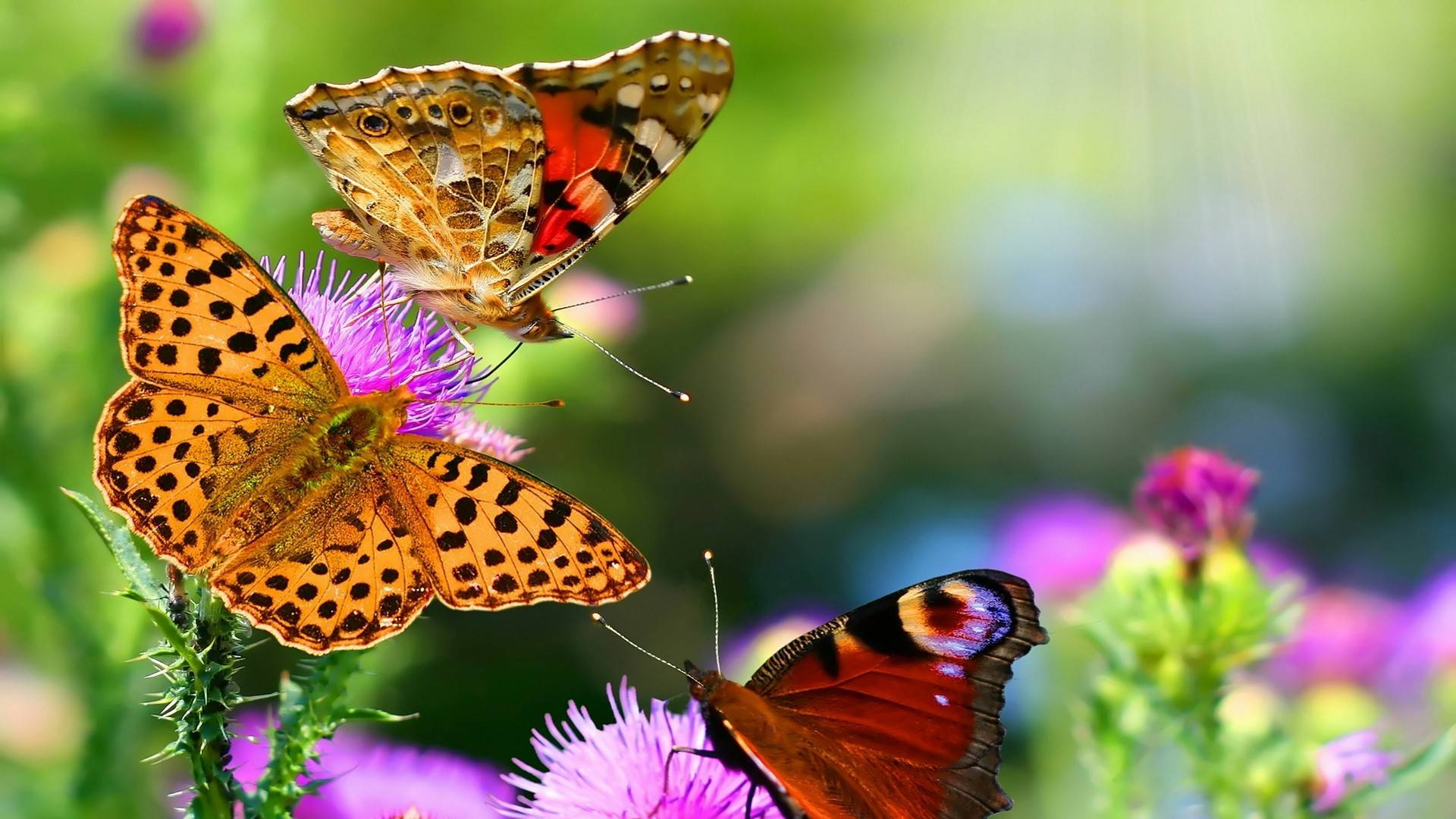 Beautiful Buterfly In The Nature Hd Wallpaper - Free Android ...