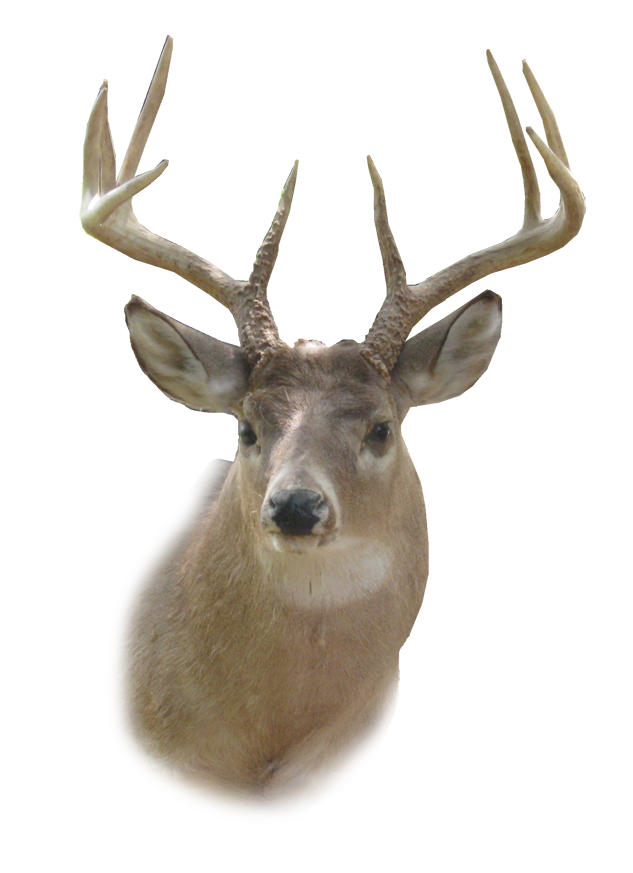 Deer Head Stencil - Cl...