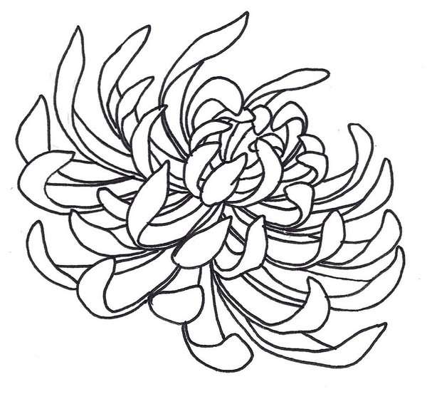 Japanese Tattoo Line Drawing : Chrysanthemum clipart cliparts
