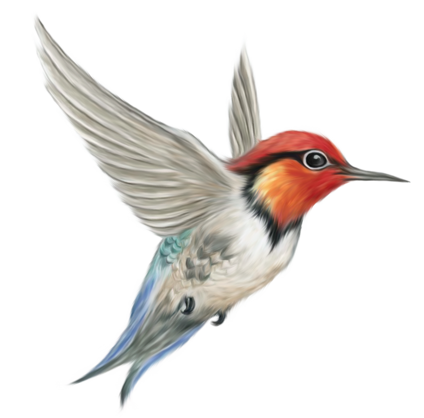 Bird Png - Cliparts.co