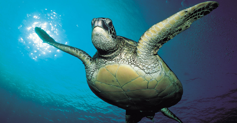 Sea Turtle Tour | Mexico Ecotourism | Natural Habitat Adventures