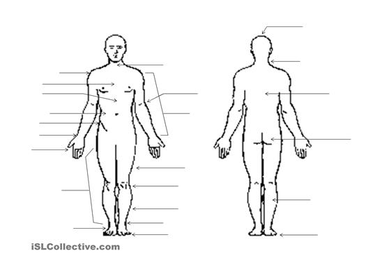 Outline Of Body Cliparts
