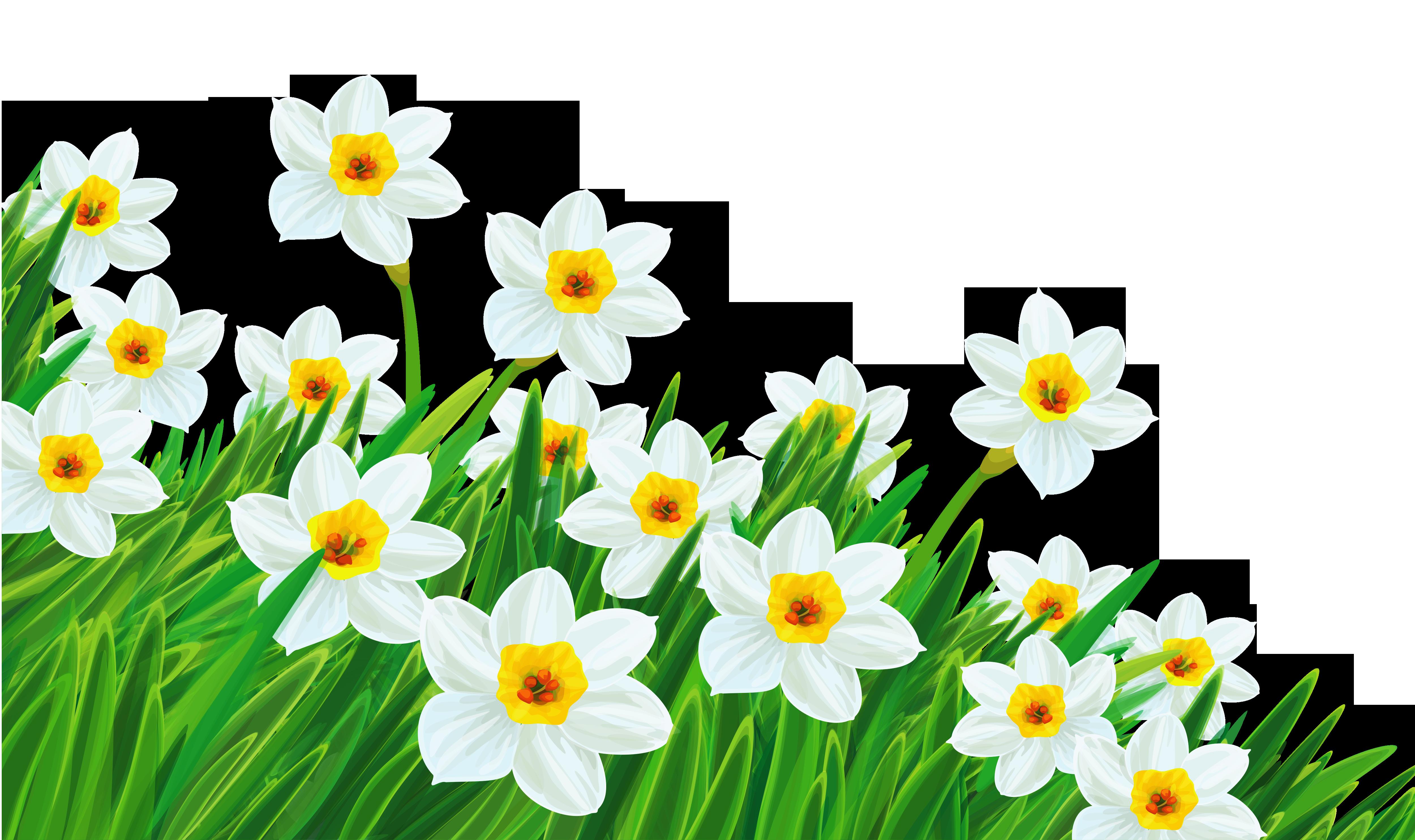 Daffodil Clip Art - Cliparts.co
