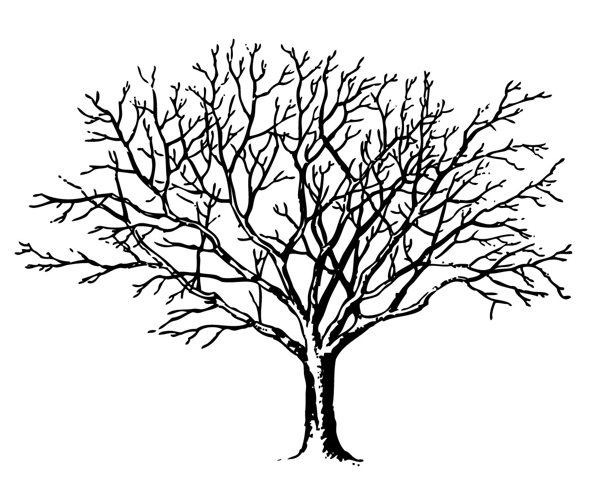 Tree Line Drawings - ClipArt