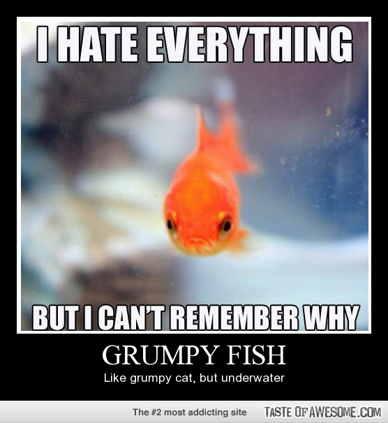 Funny fish for Funny fish pictures