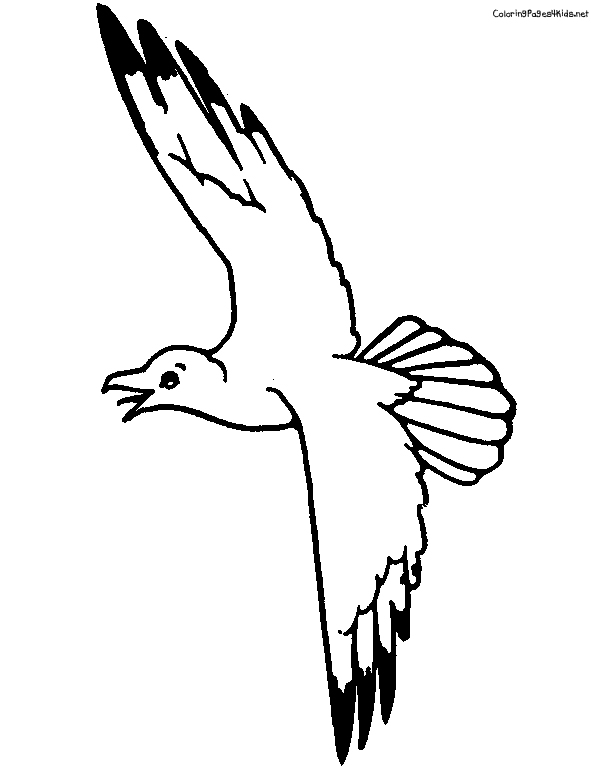 seagull in flight coloring pages - photo#14