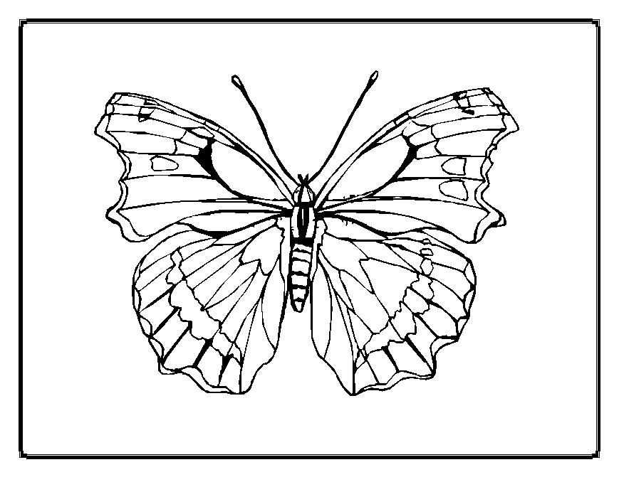 Symmetry Coloring Sheets