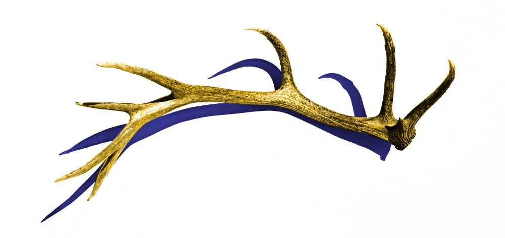 elk antlers graphic - photo #9