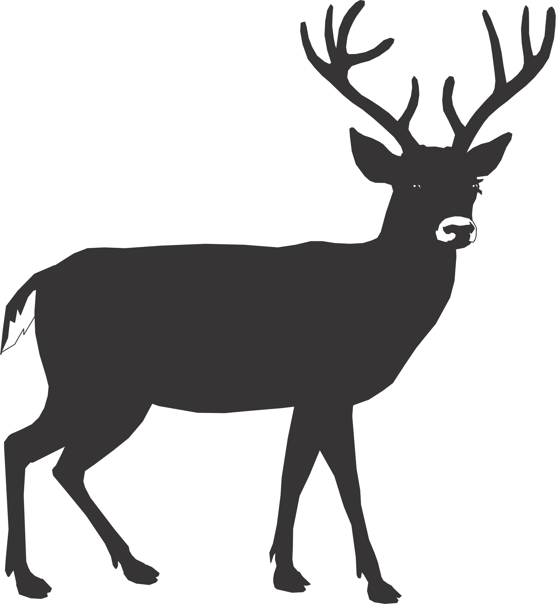 Buck deer head outline