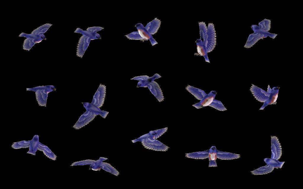 blue jay clip art cliparts co blue jay bird clip art blue jay clipart to color