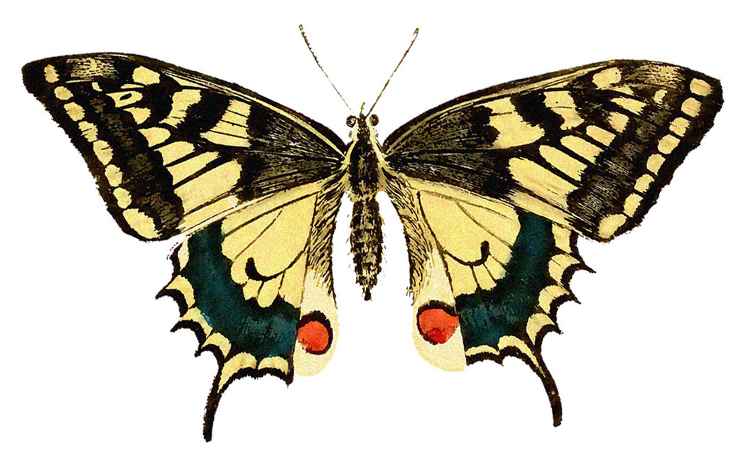 Thursday is Request Day - Swallow Tail Butterfly, Lavender Seed ...