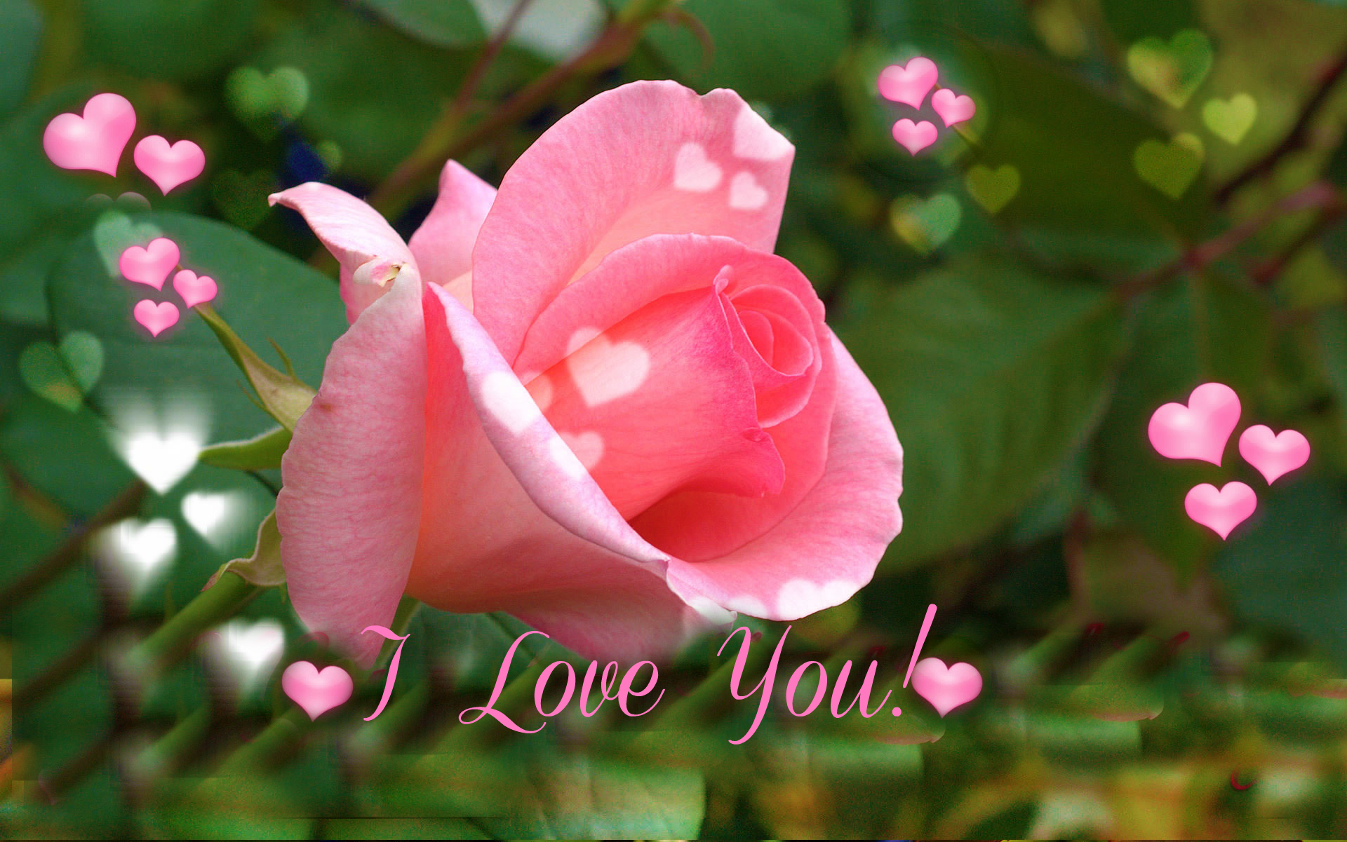 I love you pink rose for valentine s day wallpapers hd - Pink rose hd wallpaper for mobile ...