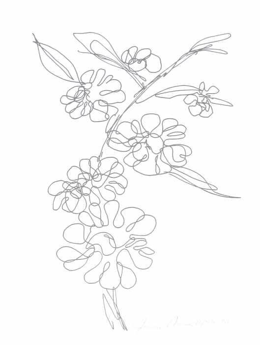 Hawaiian Flower Line Drawing : Hawaiian flower drawing cliparts