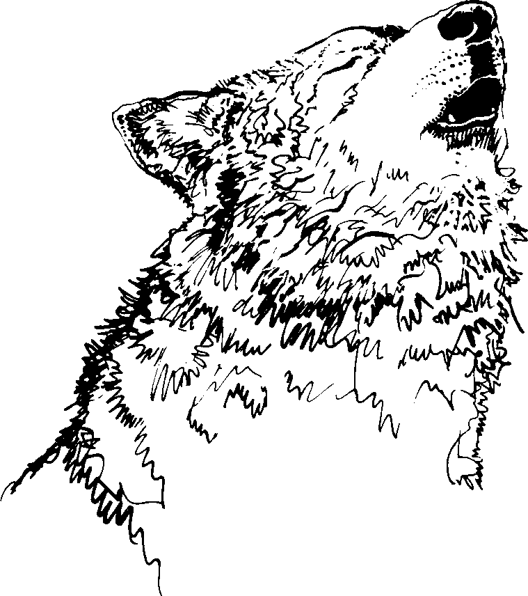 Howling Cartoon Wolf - Cliparts.co